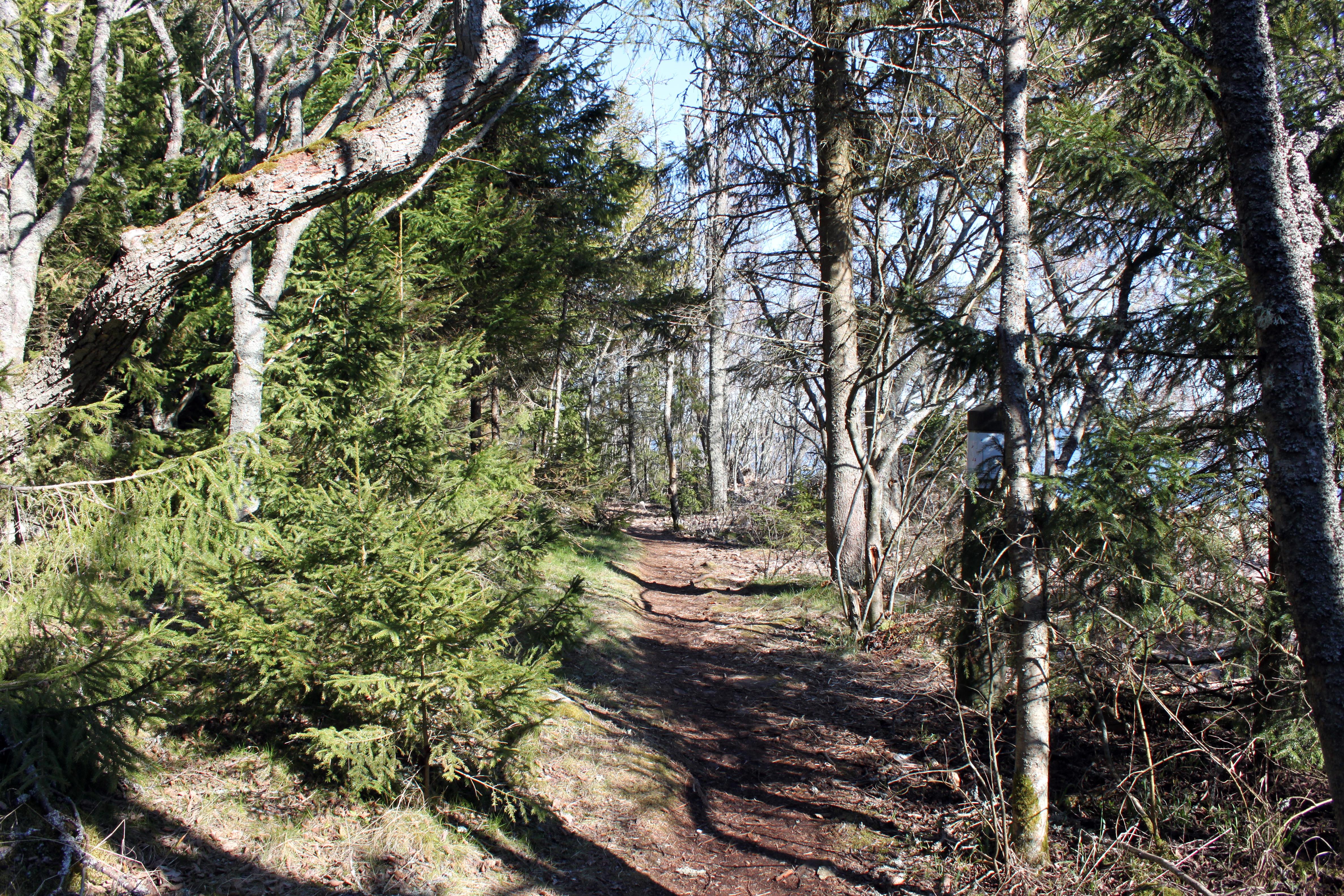 Suomen luonnon päivän metsäretki Kullaalle